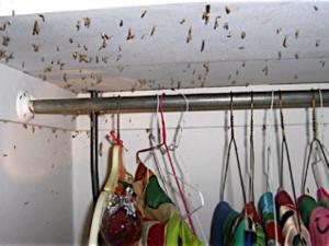 Pest Control Biotech Pest Management