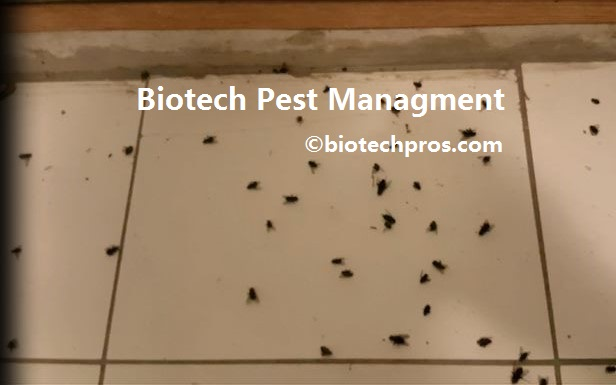 house flies in the basement of newly purchase dc house biotech pest